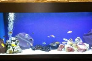 LED akvariumo apšvietimas